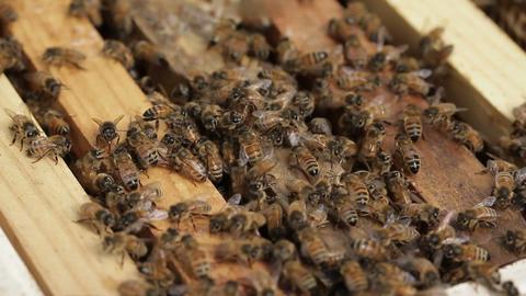 Bee macro footage of bee hive and honey production beekeeper Footage