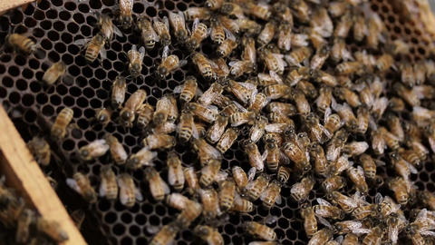 Bee Hive macro footage of bees and honey production beekeeper Footage