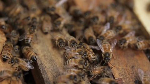 Macro Honey bee macro footage of bee hive and honey production beekeeper Footage