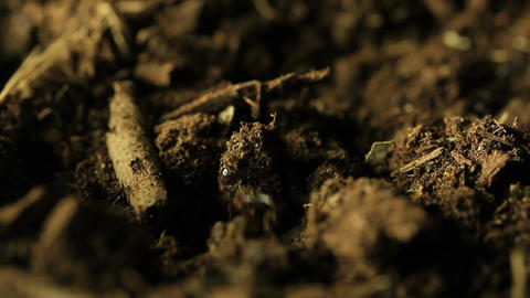 Cicada emerging from ground Footage