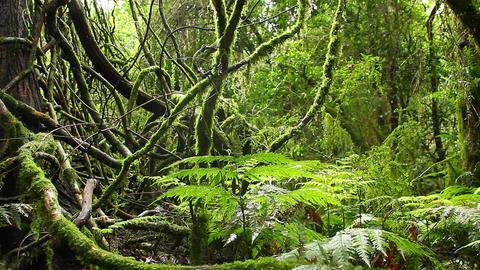 Tree Vines - Rainforest - Australian Landscape Footage