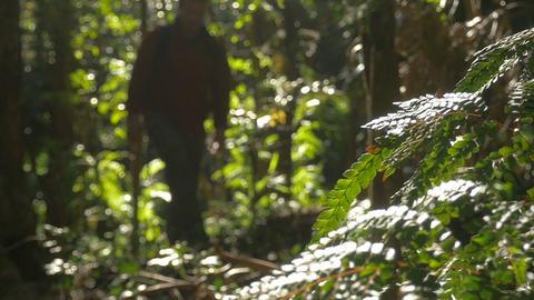 Man Hiking Walking In Outdoors Jungle Footage