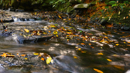 Natural fresh water flowing over rocks autumn colors outdoors Live Action