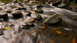 Autumn colors flowing fresh water of creek over small waterfall Footage