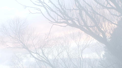 Spiritual Pastel Winter Branches 1 Live Action