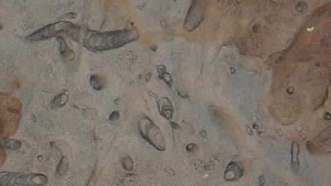 Geology - Sedimentary Structures ichnofacies Footage