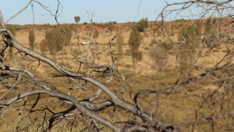 Outback Australia Landscape Red Desert Sand and Dry Arid Grasslands Footage