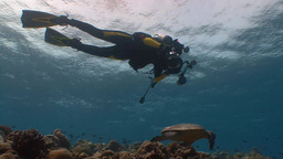 Underwater Photographer Shooting A Hawksbill Turtle Hovering Over A Reef In The  stock footage